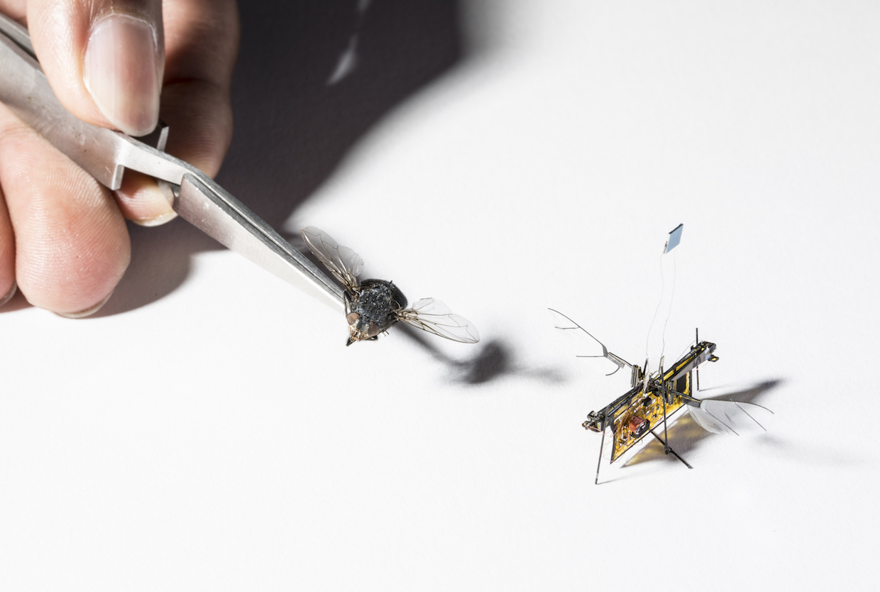 University of Washington's RoboFly