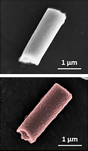 Images of the bare nanorobot without the red blood cell and platelet hybrid membrane coating (top) and the cloaked biohybrid nanorobot (bottom).